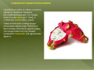 Современное пищевое использование Opuntia ficus-indicaи сейчас остается одни
