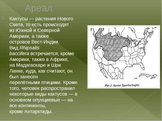 Ареал Кактусы— растенияНового Света, то есть происходят изЮжнойиСеверной...