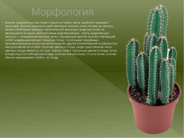 Морфология Многиесуккулентные растенияСтарогои Нового света ошибочно назыв...