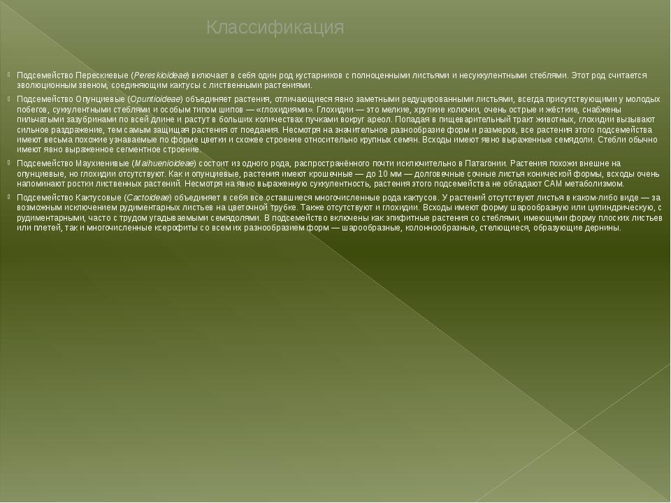 Классификация ПодсемействоПерескиевые(Pereskioideae) включает в себя один р...