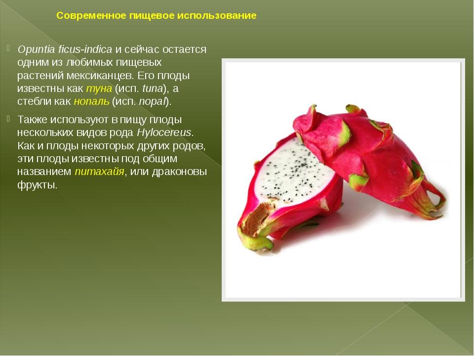 Современное пищевое использование Opuntia ficus-indicaи сейчас остается одни...