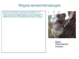 Фауна млекопитающих Практически полное отсутствие плацентарных млекопитающих