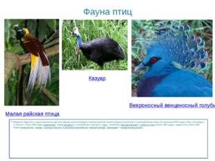 Фауна птиц Видовая бедность и одностороннее развитие фауны млекопитающих комп