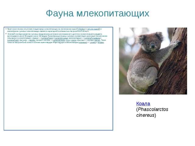 Фауна млекопитающих Практически полное отсутствие плацентарных млекопитающих...