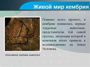 Ископаемое хордовое животное Помимо всего прочего, в кембрии появились первые
