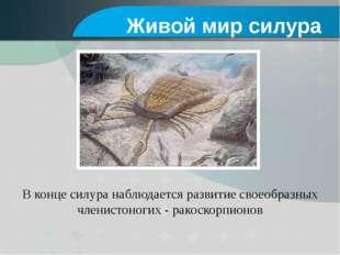В конце силура наблюдается развитие своеобразных членистоногих - ракоскорпион