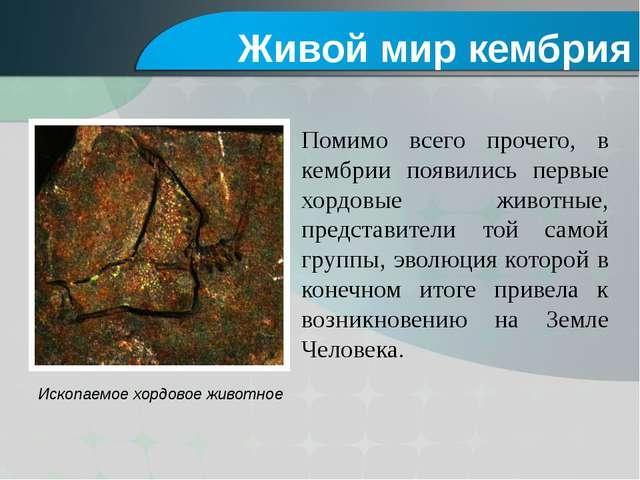 Ископаемое хордовое животное Помимо всего прочего, в кембрии появились первые...
