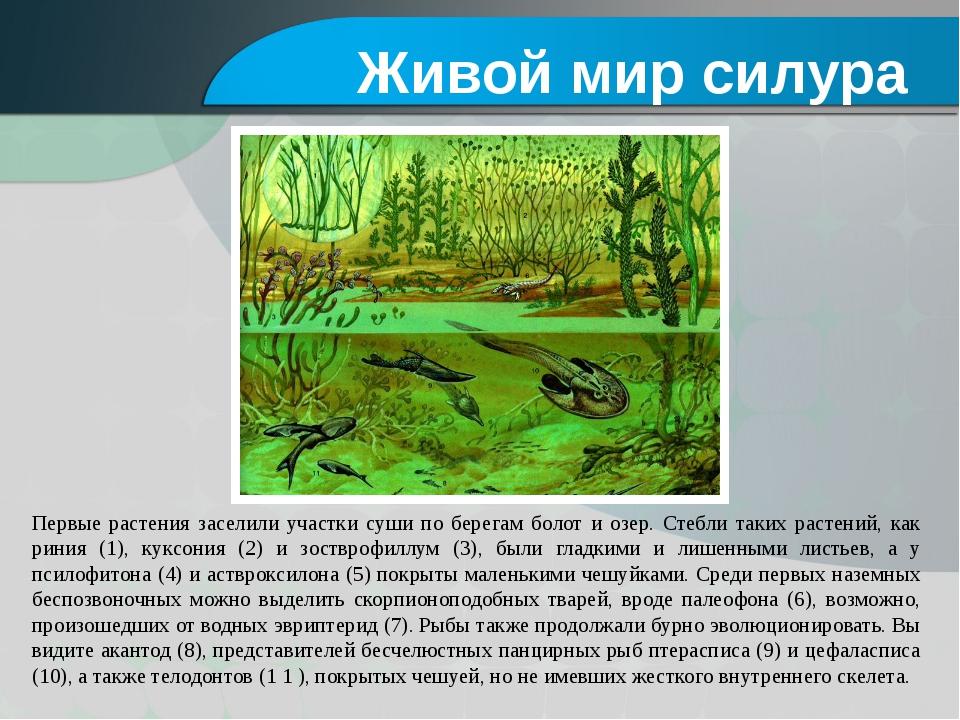 Первые растения заселили участки суши по берегам болот и озер. Стебли таких р...