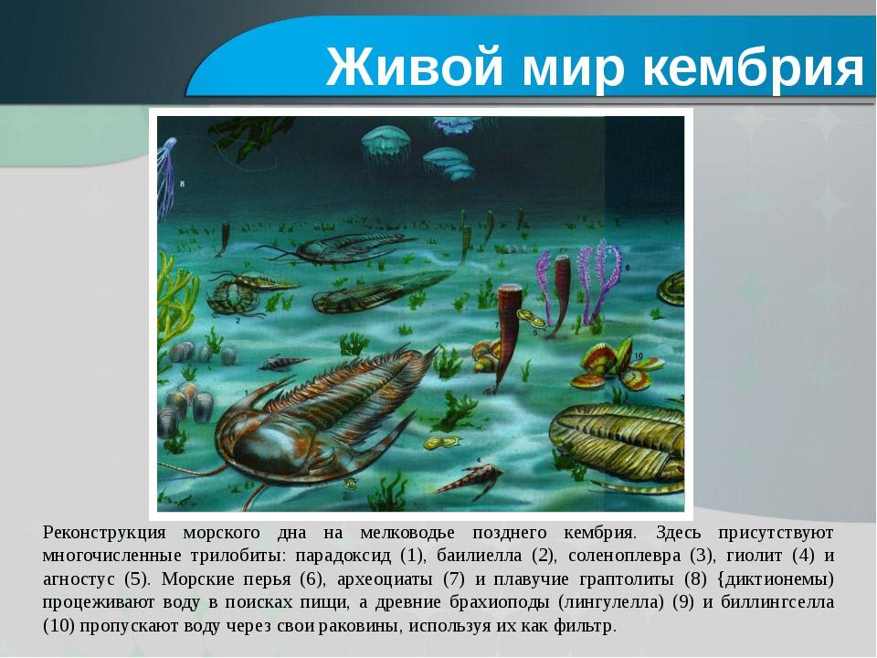 Реконструкция морского дна на мелководье позднего кембрия. Здесь присутствуют...