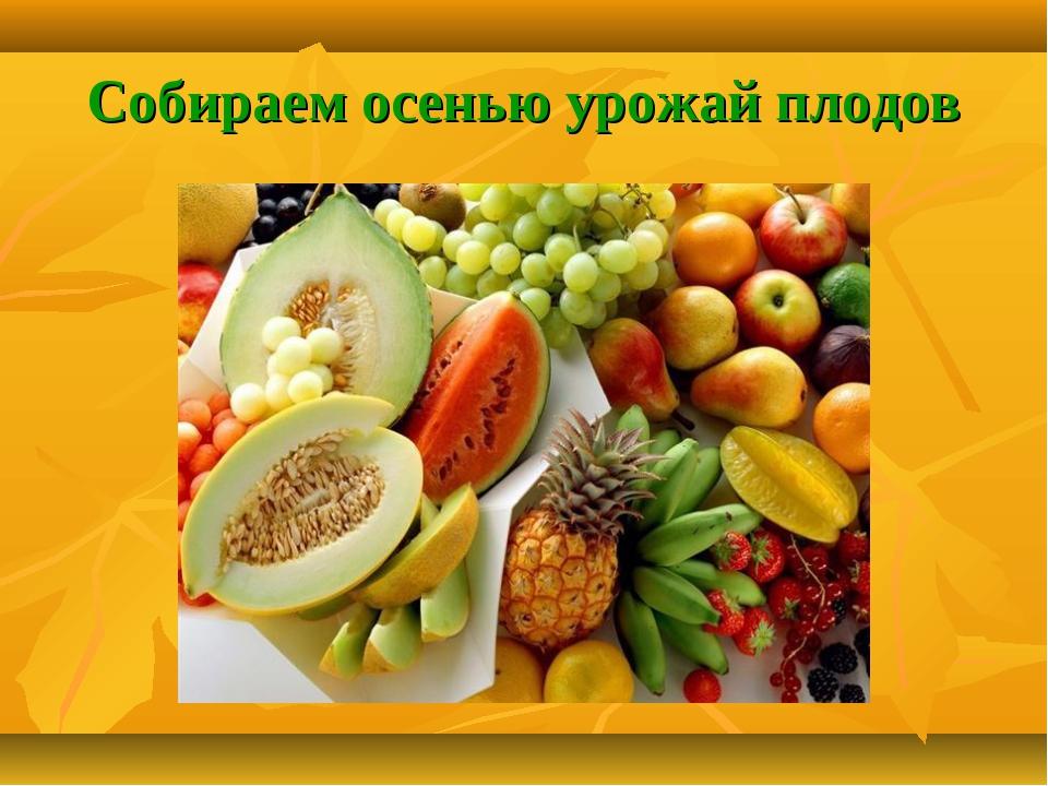 Собираем осенью урожай плодов