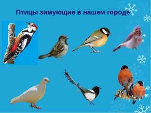 Птицы зимующие в нашем городе