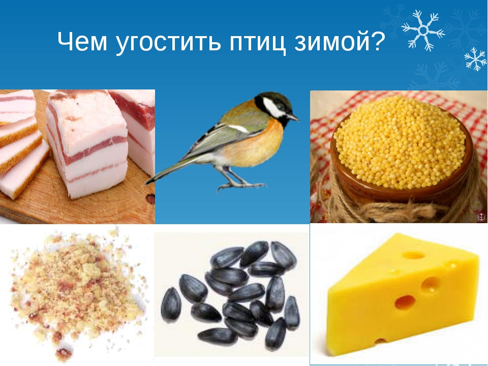 Чем угостить птиц зимой?