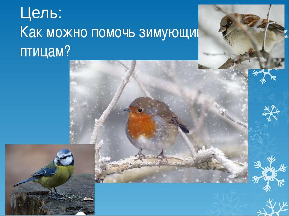 Цель: Как можно помочь зимующим птицам?