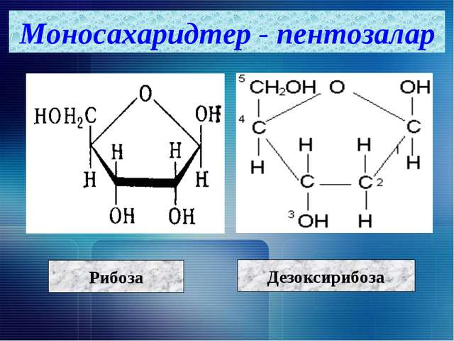 Моносахаридтер - пентозалар Рибоза Дезоксирибоза