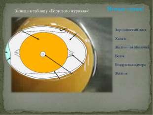 Зародышевый диск Халаза Желточная оболочка Белок Воздушная камера Желток Новы