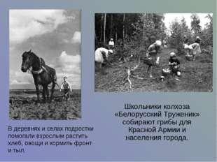 Школьники колхоза «Белорусский Труженик» собирают грибы для Красной Армии и