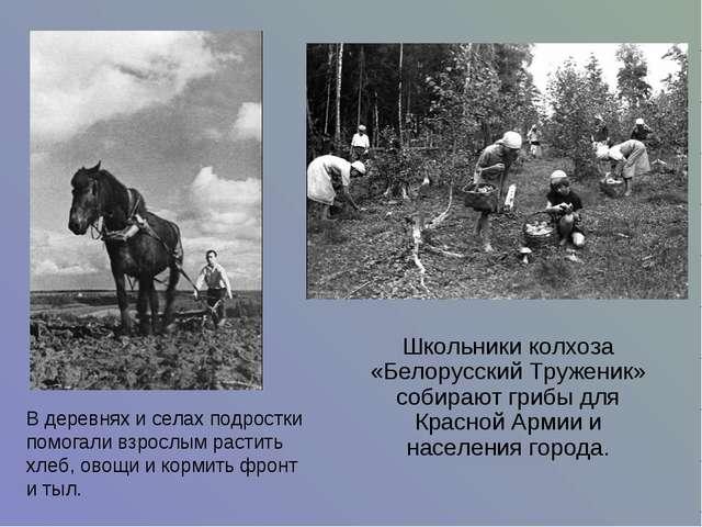 Школьники колхоза «Белорусский Труженик» собирают грибы для Красной Армии и...