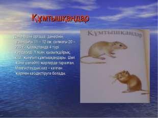 Құмтышқандар Дене пішіні орташа, денесінің ұзындығы 11 – 12 см, салмағы 20 –