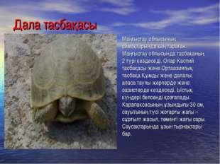 Дала тасбақасы Маңғыстау облысының аймақтарында кең тараған. Маңғыстау облысы