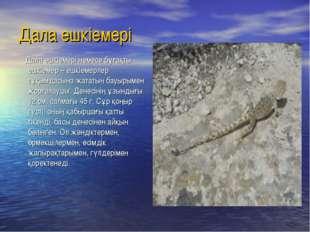 Дала ешкіемері Дала ешкіемері немесе бұғақты ешкіемер – ешкіемерлер тұқымдасы