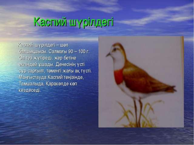 Каспий шүрілдегі Каспий шүрілдегі – шөл балшықшысы. Салмағы 90 – 100 г. Ол т...
