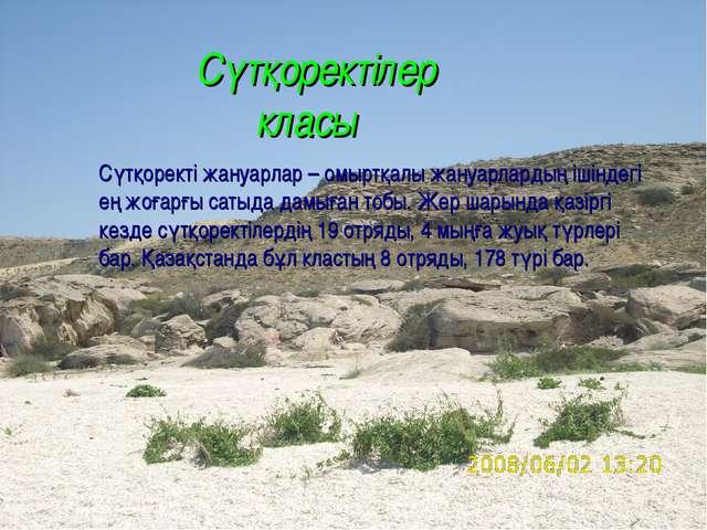 Сүтқоректілер класы Сүтқоректі жануарлар – омыртқалы жануарлардың ішіндегі е...