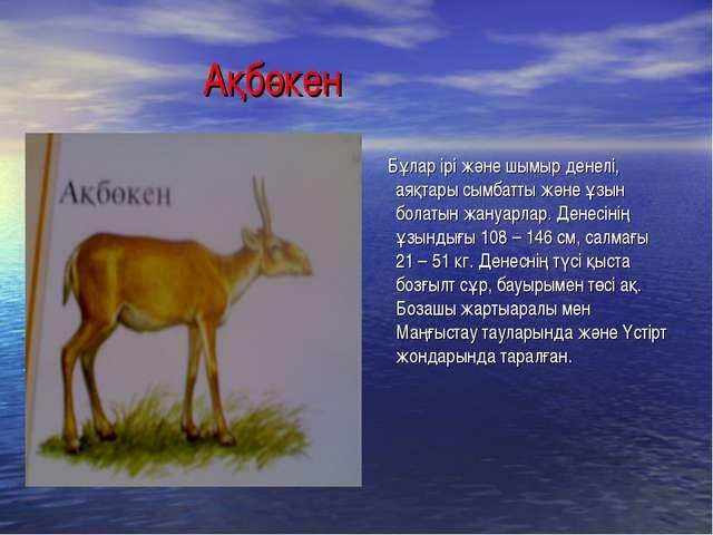Ақбөкен Бұлар ірі және шымыр денелі, аяқтары сымбатты және ұзын болатын жану...