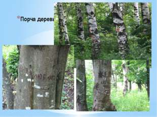 Порча деревьев