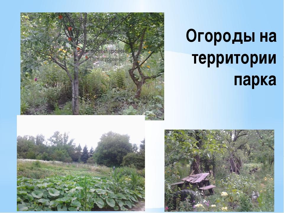 Огороды на территории парка