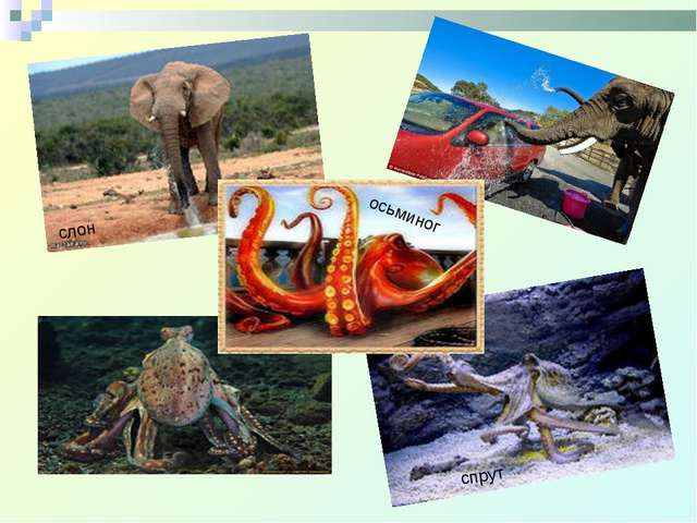 слон осьминог спрут