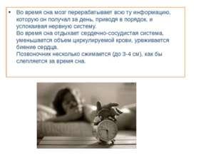 Во время сна мозг перерабатывает всю ту информацию, которую он получал за ден
