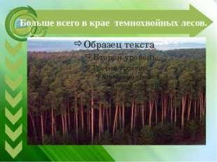 Больше всего в крае темнохвойных лесов.