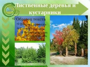 Лиственные деревья и кустарники