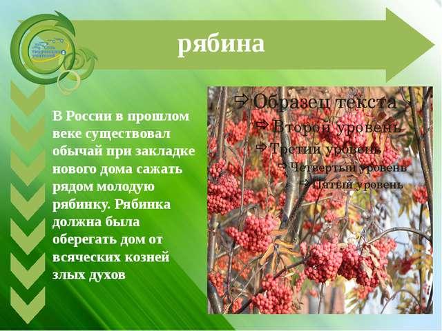 рябина В России в прошлом веке существовал обычай при закладке нового дома са...