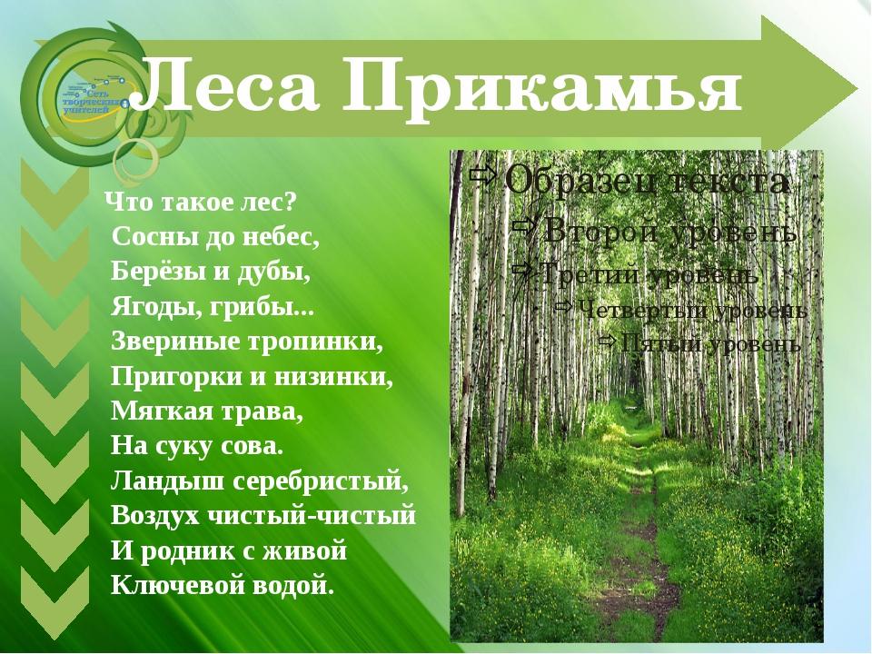 Леса Прикамья Что такое лес? Сосны до небес, Берёзы и дубы, Ягоды, грибы... З...