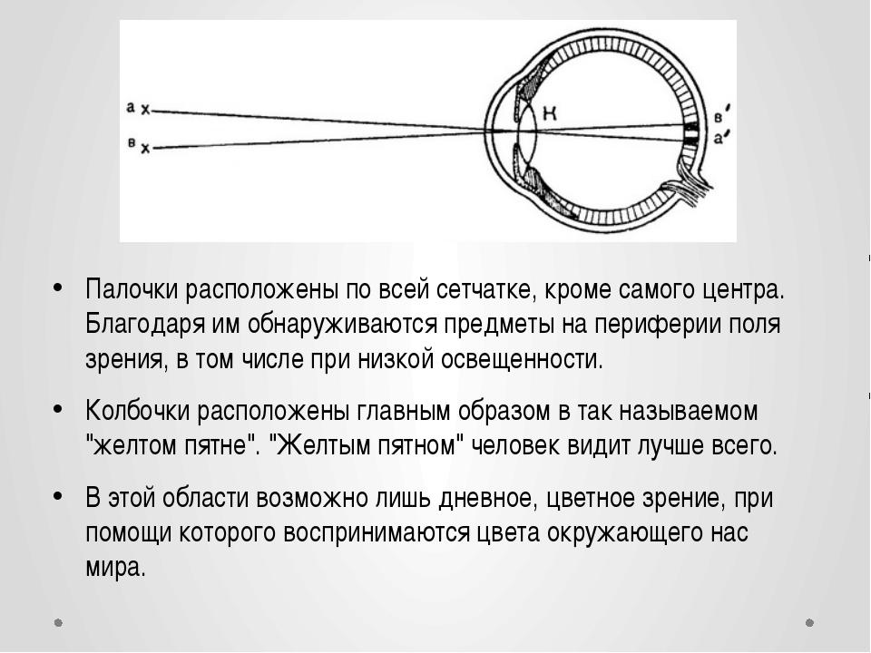 Палочки расположены по всей сетчатке, кроме самого центра. Благодаря им обна...