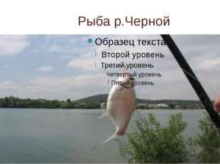 Рыба р.Черной