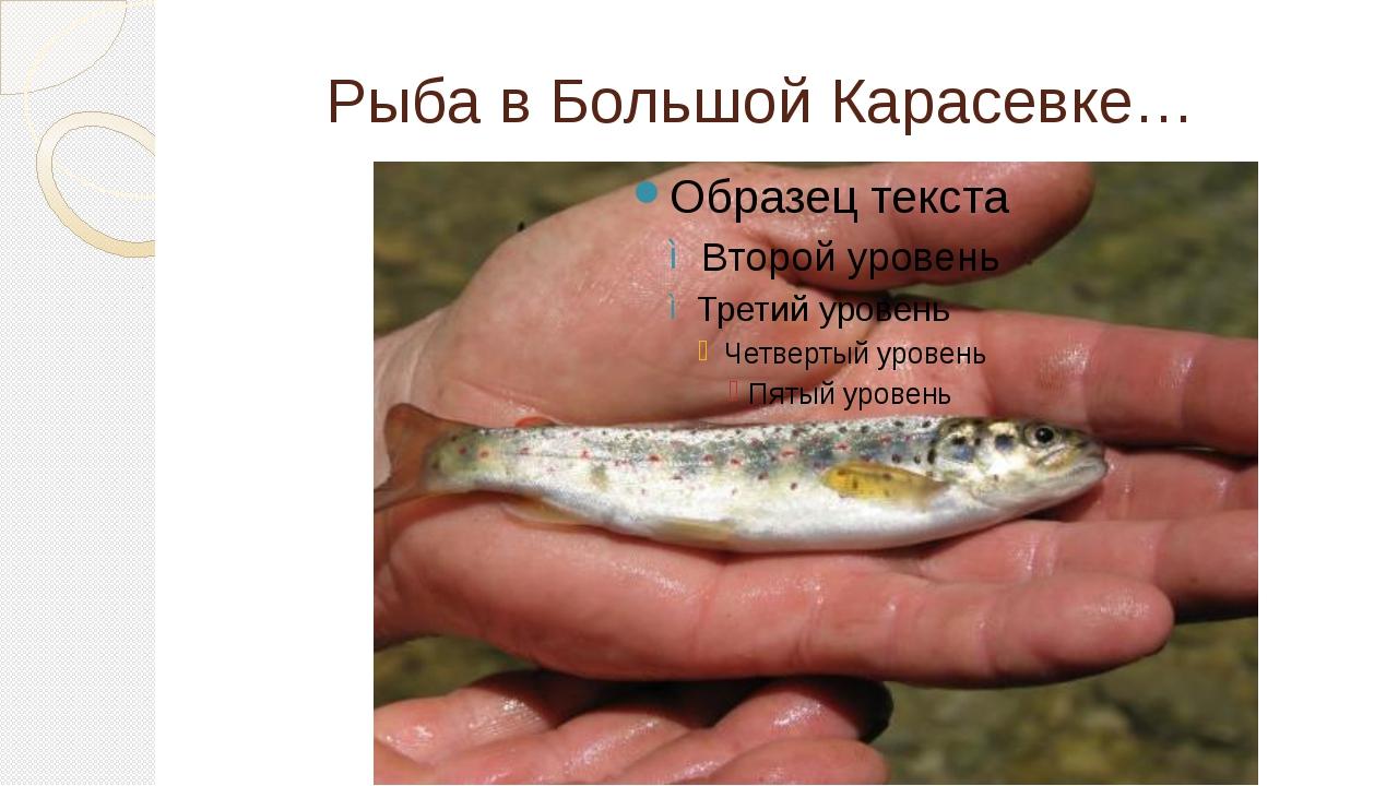 Рыба в Большой Карасевке…