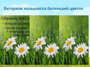 Ветерком колышется беленький цветок