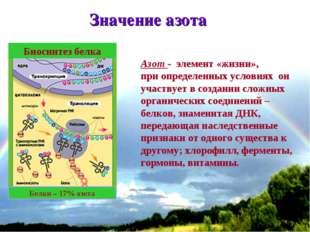 * Значение азота Азот - элемент «жизни», при определенных условиях он участву