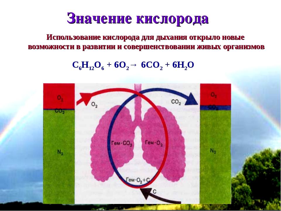 * C6H12O6 + 6O2→ 6CO2 + 6H2O Значение кислорода Использование кислорода для д...