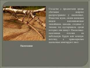 Сходство с предметами среды обитания широко распространено у насекомых. Изве
