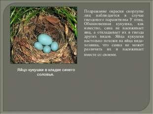 Подражание окраски скорлупы лиц наблюдается в случае гнездового паразитизма