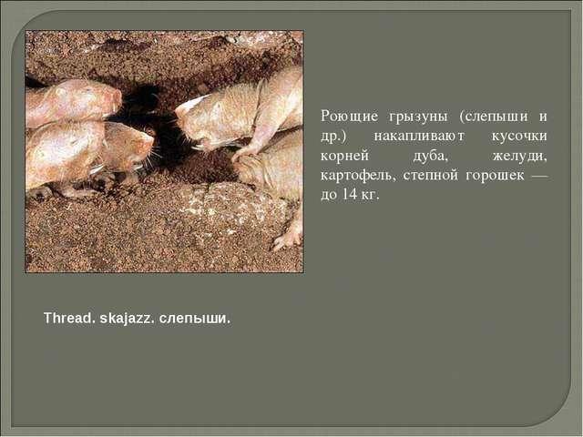 Роющие грызуны (слепыши и др.) накапливают кусочки корней дуба, желуди, карт...