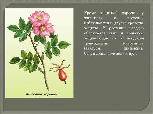 Кроме защитной окраски, у животных и растений наблюдаются и другие средства...