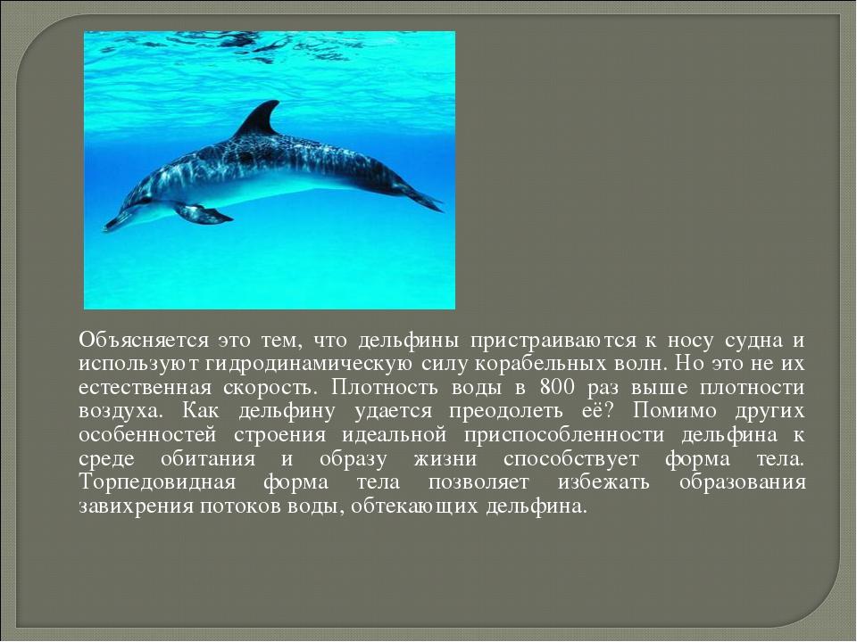 Объясняется это тем, что дельфины пристраиваются к носу судна и используют г...