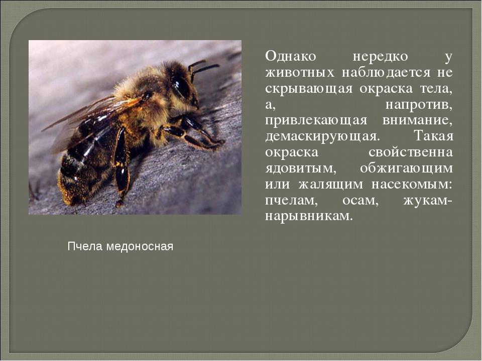 Однако нередко у животных наблюдается не скрывающая окраска тела, а, напроти...