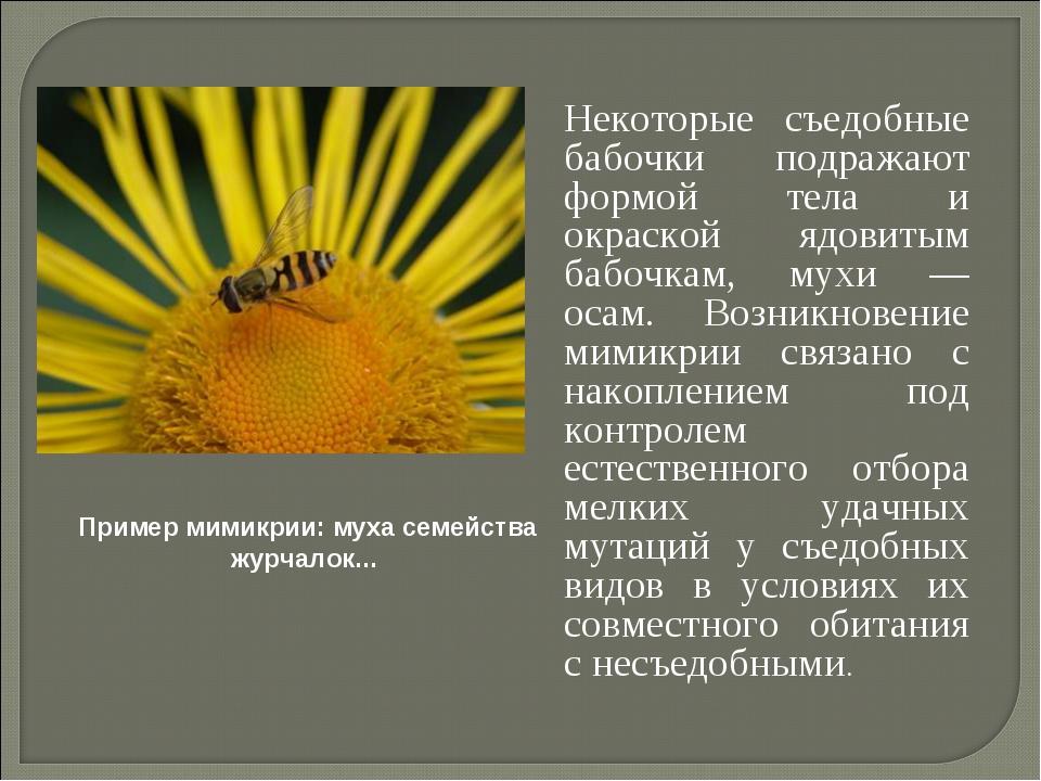 Некоторые съедобные бабочки подражают формой тела и окраской ядовитым бабочк...