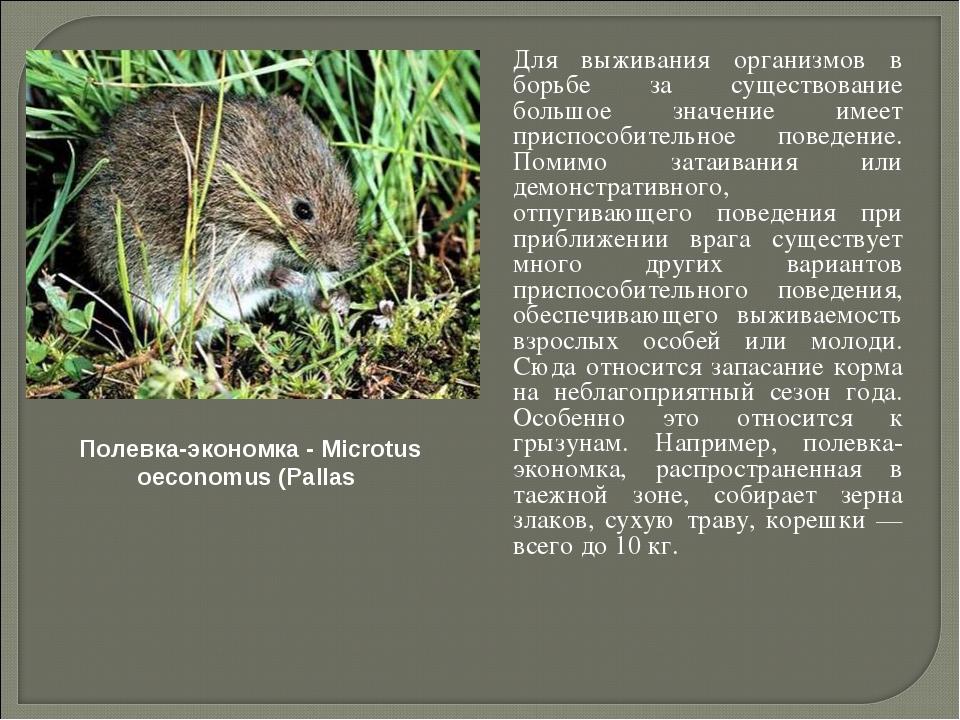 Для выживания организмов в борьбе за существование большое значение имеет пр...