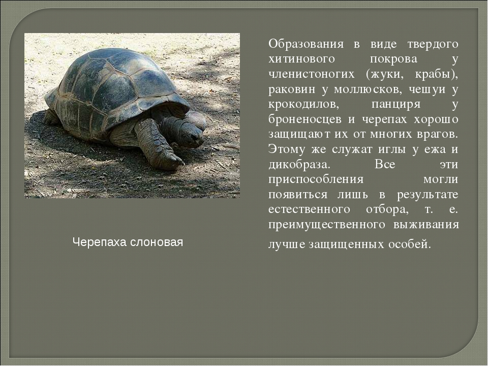 Образования в виде твердого хитинового покрова у членистоногих (жуки, крабы)...